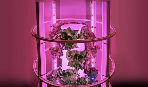 Everything you need to know about indoor gardening for Indoor gardening led