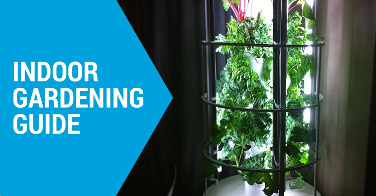 Everything you need to know about indoor gardening for Indoor gardening machine