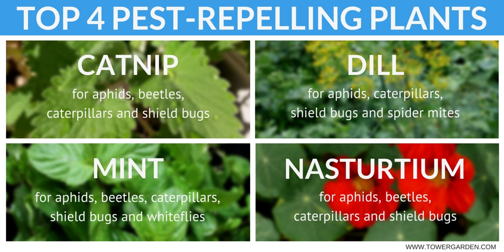 good gardening pest control part 1 repel garden pests with plants. beautiful ideas. Home Design Ideas