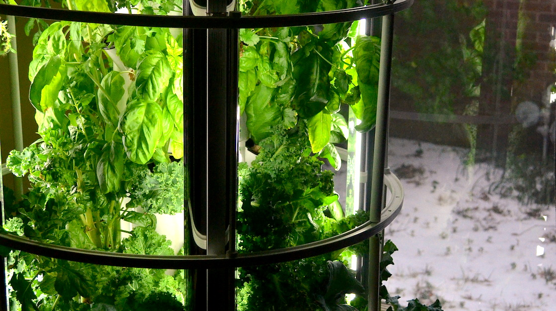 Indoor Gardening Why Winter Is The New Spring