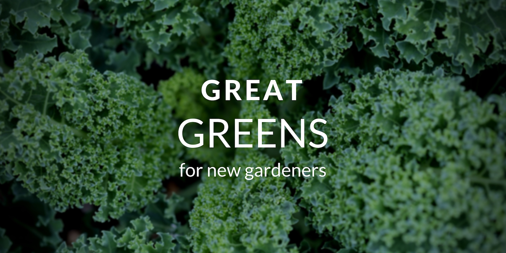 Great Greens New Gardeners Should Grow