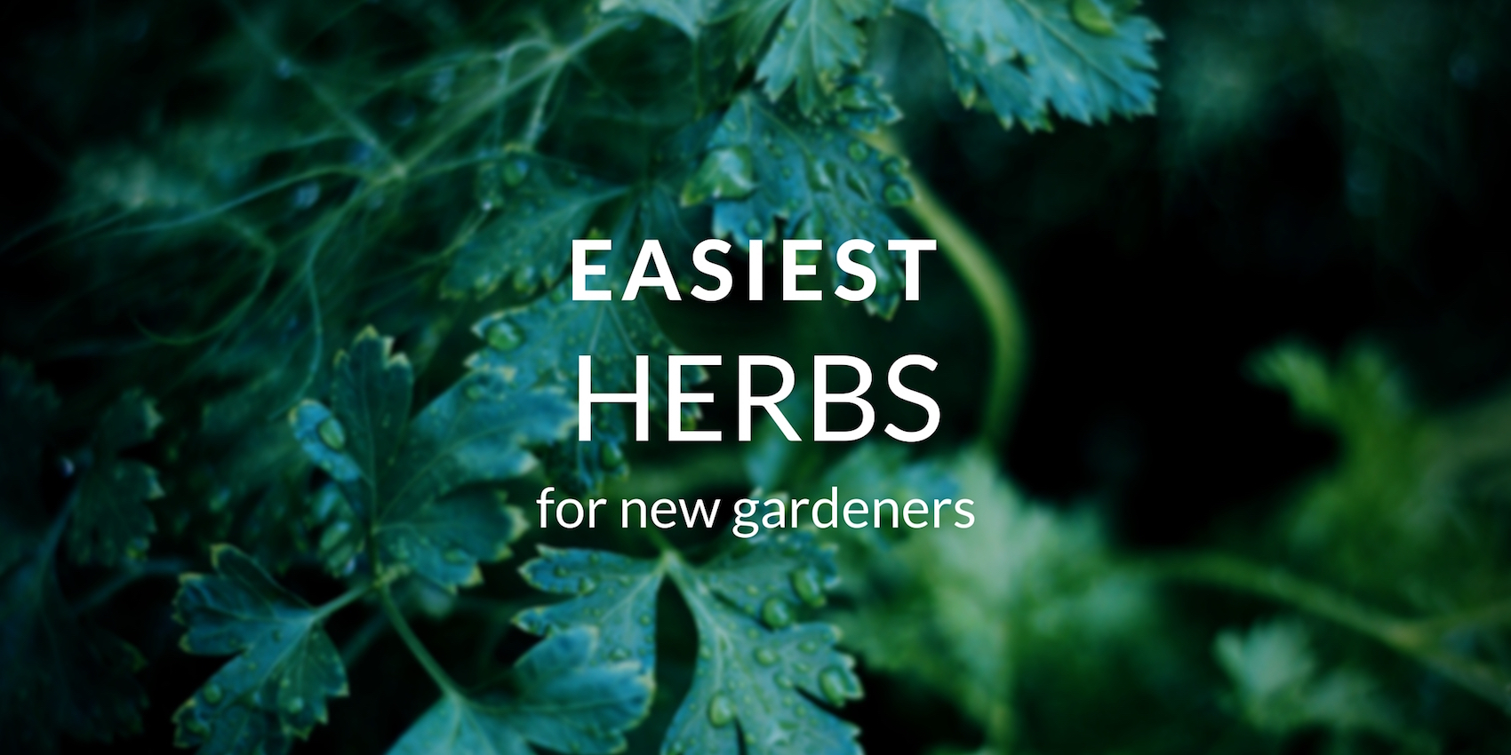 Top Herbs New Gardeners Should Grow