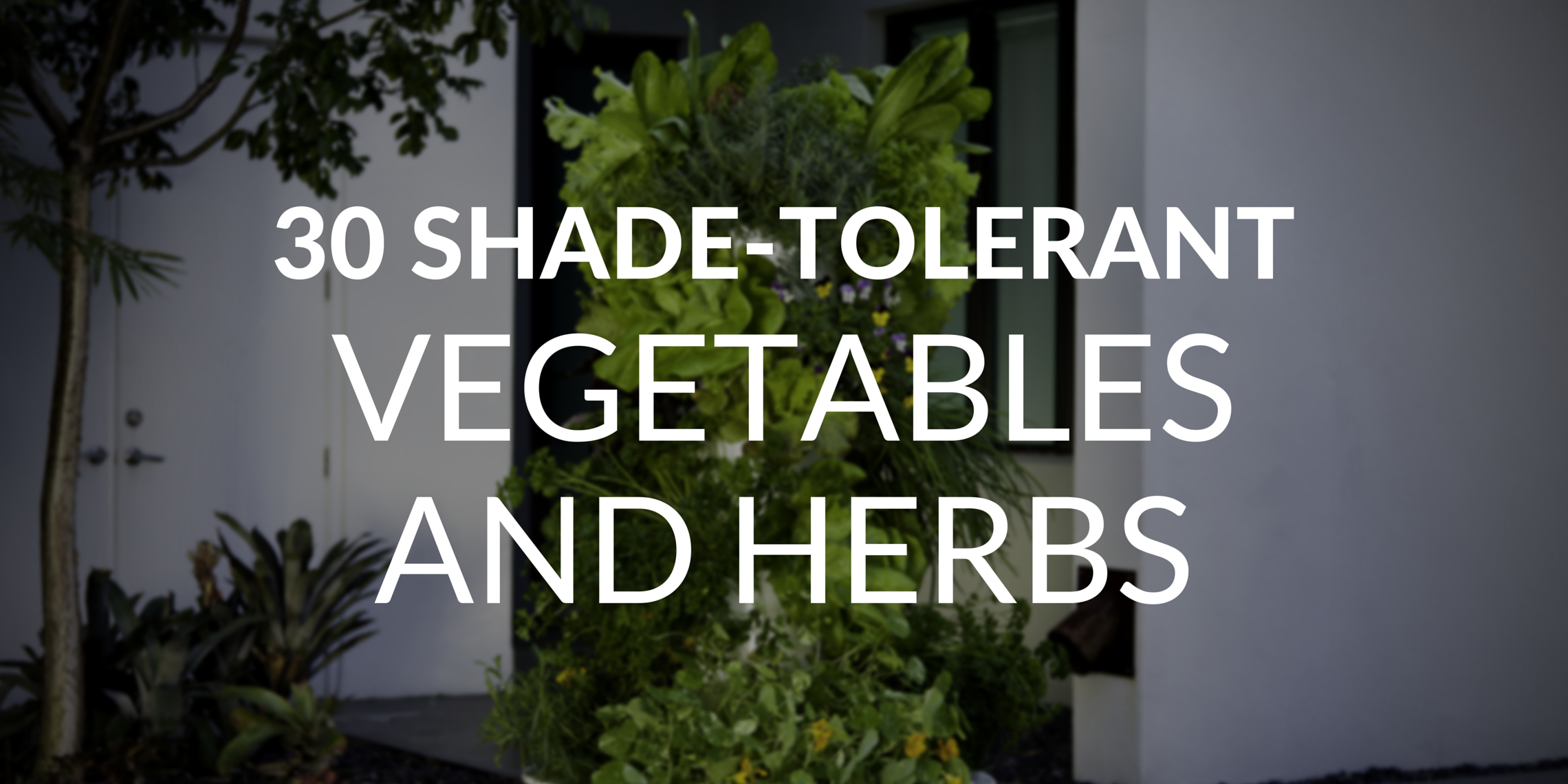 How To Grow A Stellar Garden Even In The Shade