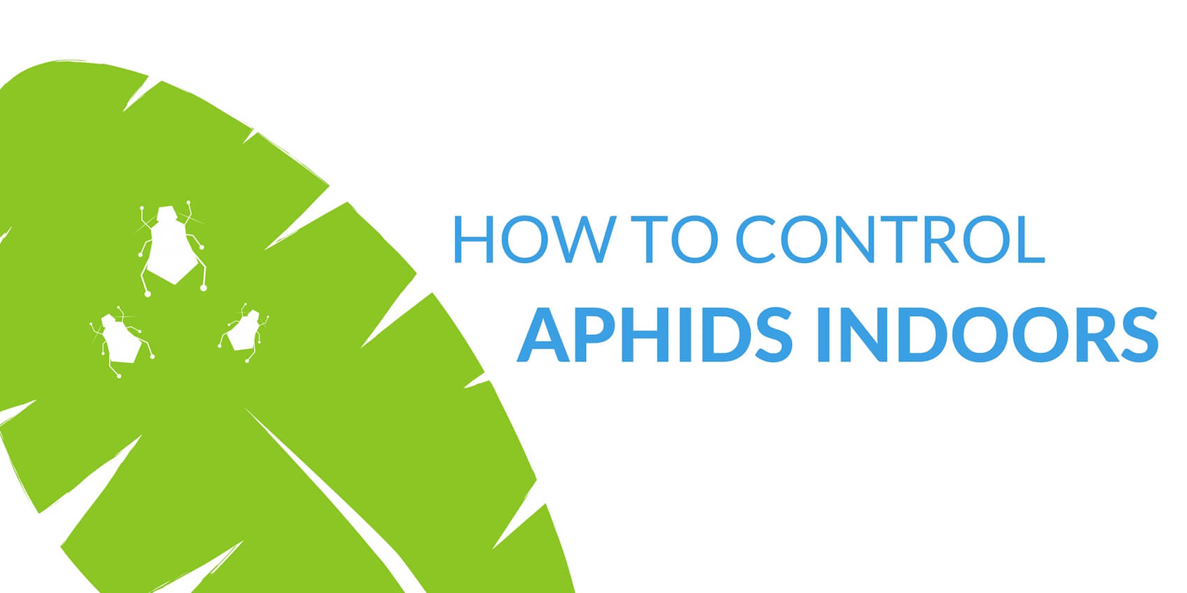 Aphids on Indoor Plants: How to Control Garden Pests Inside