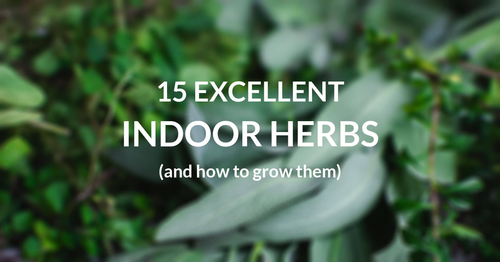 15 Excellent Herbs To Grow Indoors
