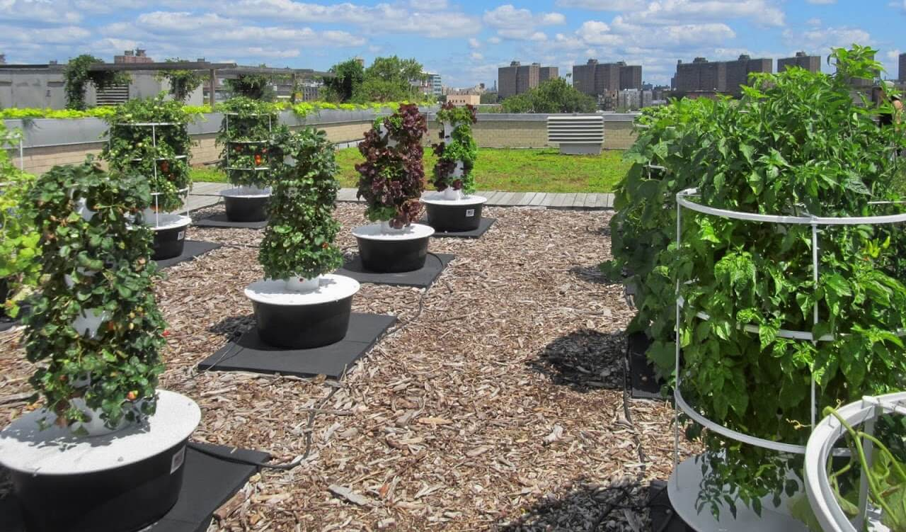 urban farming in new york Urban farming gives new purpose to rooftops, patios and unused space the beauty of urban farming is that it not only produces an abundance of organic, locally.