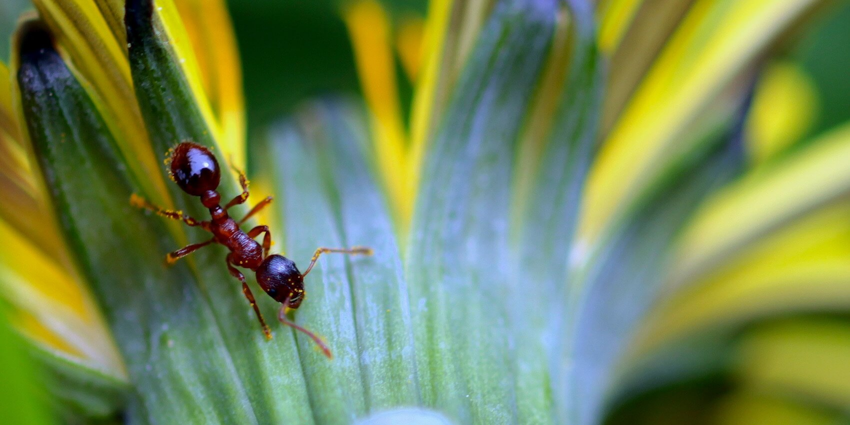 Got Ants in Your Plants? Here\'s What You Need to Know