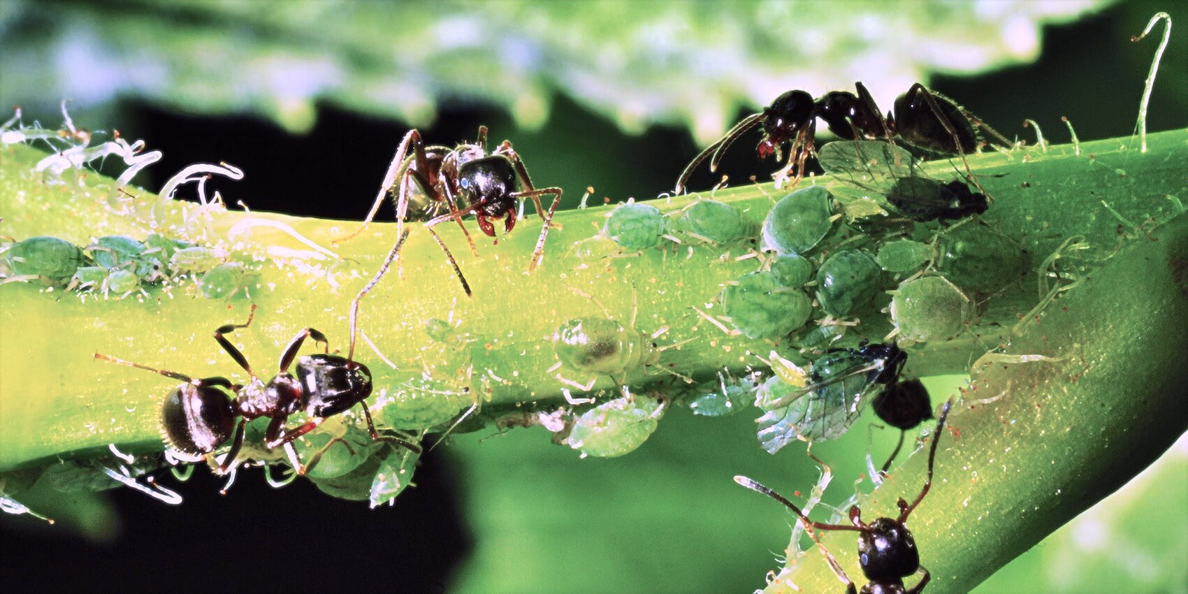 On how to get the ants out of the garden and whether it really needs to be done